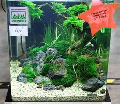nano aquarium bonsai - Google Search