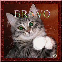 felictation examen | Bravo - Applaudissement du chat
