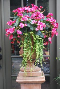 •.¸¸♥ beautiful begonia with creeping jenny •.¸¸♥