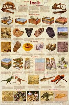 """Ifyou """"dig"""" dinosaurs then you'll love thisgreat infographic poster about fossils and dinosaur evolution. Fully licensed. Ships fast. 24x36 inches. Check out Science Chart, Dinosaur History, Dinosaur Posters, Paleo For Beginners, Dinosaur Fossils, Dinosaur Dinosaur, Prehistoric Creatures, Prehistoric Wildlife, Science Nature"""