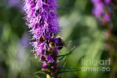 BUSY BEES Available in prints, framed prints, canvas prints, acrylic prints, metal prints, greeting cards.