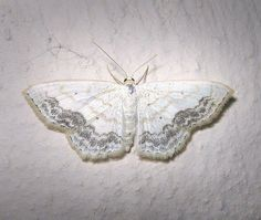 """""""There is something about her uncertain manner aswell as her white clothes that suggests a moth"""""""