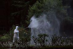Sul da China luta contra dengue, número recorde de casos | #AedesAegypti, #China, #Dengue, #FebreAmarela, #Guangdong, #LuChen, #Mosquito