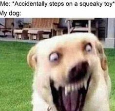 Super Funny Memes, Funny Dog Memes, Crazy Funny Memes, Really Funny Memes, Funny Relatable Memes, True Memes, Stupid Memes, Funny Stuff, Funniest Memes