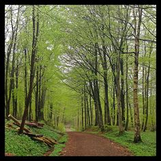 Visit Torningmark, Denmark. Grandfather. Mum's side. This pic: Hindemade Forrest at Haderslev, Denmark.
