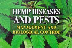 66 Best Weed images in 2019   Marijuana plants, Cannabis