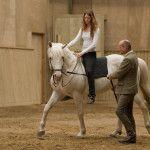 Training horses - www.bentbranderup.de