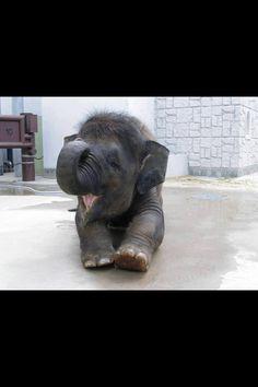We love baby elephants first thing in the morning :) #BabyElephant #ElephantConservation