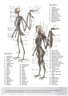 the resurrectionist - Google Search
