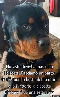Rottweiler Welpen Find Out More On The Loving Rottweiler Puppies Health Cute Puppies, Cute Dogs, Dogs And Puppies, Doggies, Cute Baby Animals, Funny Animals, German Dog Breeds, Pet Breeds, Rottweiler Puppies
