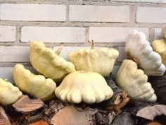 Stuffed Mushrooms, Vegetables, Cooking, Autumn, Stuff Mushrooms, Kitchen, Fall Season, Vegetable Recipes, Fall