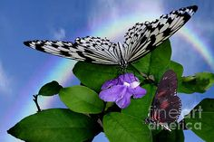 Fabulous photo by Linda Troski #photography     #butterflies   #insects   #rainbow