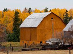 Pumpkin Barn  This orange barn matches the birch trees behind it.