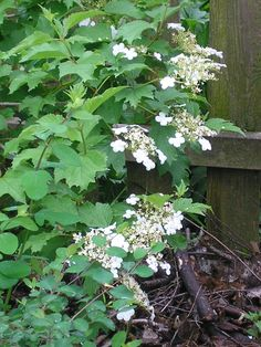 My Five Favorite Shrubs and Vines for Attracting Birds – gardeninacity Leaf Beetle, Chicago Botanic Garden, How To Attract Birds, Spring Blooms, Garden Pests, Shrubs, Attraction, Vines, Backyard