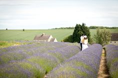 want a lavender field or at least a section of the garden devoted to it