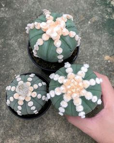 Spectacular photos of desert plants by Wachirapol Deeprom, a gifted self-taught photographer, and cactus lover currently based in Bangkok, Thailand. Growing Succulents, Cacti And Succulents, Planting Succulents, Cactus Plants, Succulents Garden, Terrarium Plants, Succulent Terrarium, Kinds Of Cactus, Unusual Plants