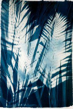Cyanotypes #4 - Marcia Trieger - Fine Art Portfolio