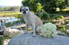 Bildergebnis für bernhard lakonig Labrador Retriever, Dogs, Animals, Labrador Retrievers, Animales, Animaux, Pet Dogs, Doggies, Animal