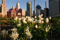About the Lurie Garden
