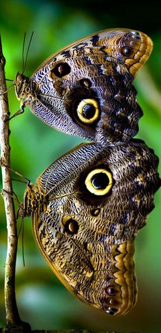 Butterflies in Costa Rica