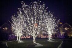 Growing on Trees: Outdoor lighting ideas White Christmas Lights, Christmas Light Displays, Xmas Lights, Holiday Lights, Outdoor Christmas, Holiday Fun, Christmas Decorations, Holiday Ideas, Outdoor Tree Lighting