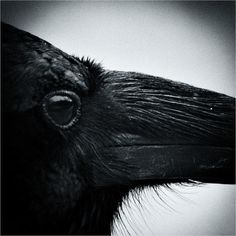 """constantflux: """" Nevermore (by josefontheroad) """""""