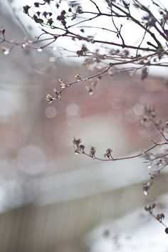 Untitled bokeh by Calina Gris Rose, Dew Drops, Rain Drops, Pink Christmas, Bokeh, Rainy Days, Pink Grey, Delicate, In This Moment