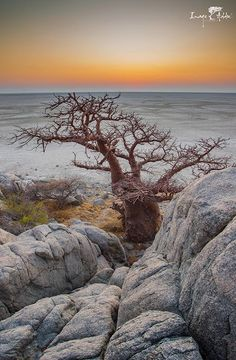 Beautiful photo of a Baobab tree on the famous Kubu Island in the Makgadikgadi salt pans of Botswana. Tanzania, Kenya, Facebook Pic, Baobab Tree, Landscape Photography, Art Photography, Natural World, Continents, National Parks
