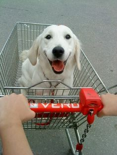 Always top of the shopping list - adorable doggie with an awesome smile!
