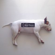 Rafael Mantesso photographs his adorable bull terrier jimmy in creative, fun and silly situations