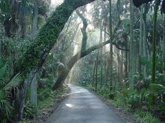 The Hammock's Loop Drive offers incredible scenic views of the hardwood hammock forest at Highlands Hammock State Park in Sebring, Florida