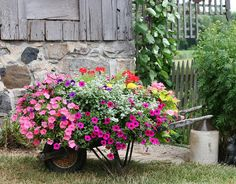Nice variety of #plants and #flowers in this #wheelbarrow