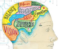 brain diagram...like a map which of course I like, like, like...