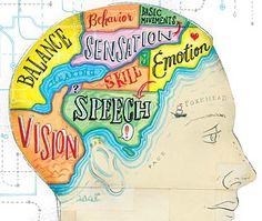 brain diagram...like a map which of course I like, like, like...