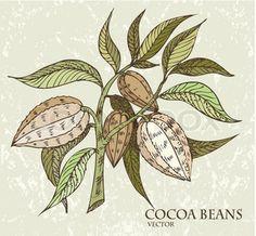 Cocoa Tree Clip Art | Cocoa Bean Clip Art