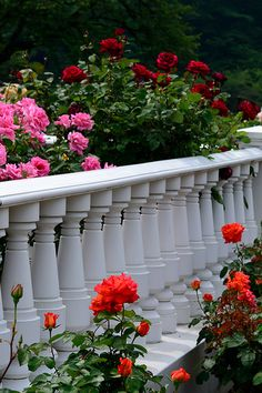 Rose Garden / (*Colors on white)