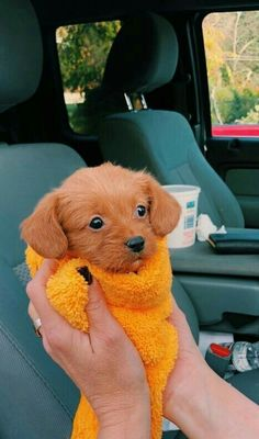 from milagros - tiere - Puppies Super Cute Puppies, Baby Animals Super Cute, Cute Baby Dogs, Cute Little Puppies, Cute Dogs And Puppies, Cute Little Animals, Cute Funny Animals, Small Puppies, Doggies