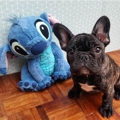 Stitch and his French Bulldog