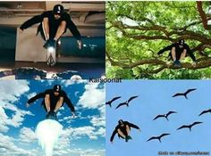 this is what chanyeol looks like when he becomes a bird. -ctto-