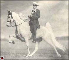 Tennessee Walking horse - White Star  Check out the action of this horse WITHOUT stacks