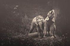 African Souls – Les superbes photographies d'animaux de Manuela Kulpa   Ufunk.net