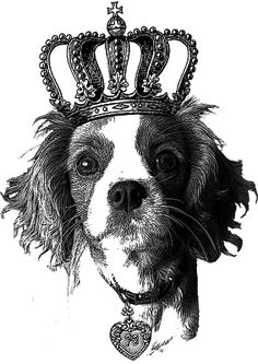 Cavalier King Charles dilettante | doyenne