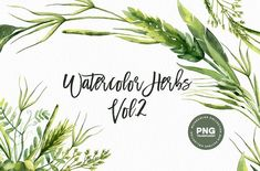 Watercolor Herbs Vol.2  by Spasibenko Art on @creativemarket