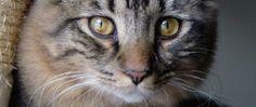 How to fix a jealous cat per Way of Cats blog