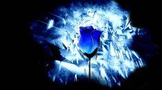Dark_Rose_by_loonyface.jpg (1280×720)
