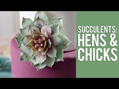 How to Make Gum Paste Echeveria Succulents - YouTube