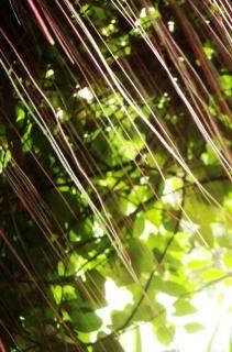 Abstract Jungle Pattern Free Stock Photo