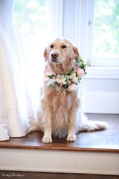 "Bride's Beloved Golden Retriever Serves as Flower Girl In Wedding: ""She's Our Fur Baby"" Wedding Pets Decor"