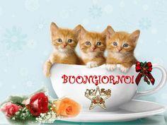 Good Morning Good Night, Morning Wish, Good Day, Italian Greetings, Italian Memes, Happy Friendship Day, Cat Gif, Pin Up, Poster