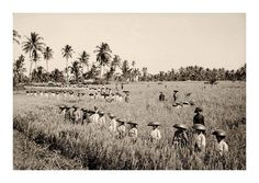 Bali 1920s